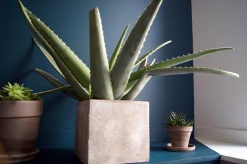 la-beau-hocmardiere-zoom-plantes.jpg